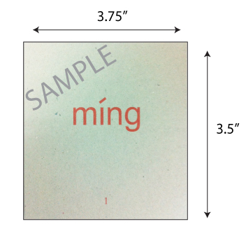 Odonata Chinese flashcards sample back pre-2020